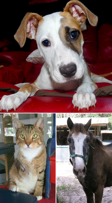 Daisy the dog, Tripod the cat, and Bunny the horse